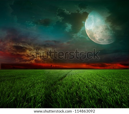 young wheat field at night with the moonlight - stock photo
