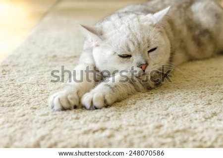 Young white cat sleeping with eyes closed - on white rug - stock photo