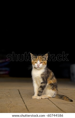 Young wild or barn cat, sitting on a barn floor. Space for copy or text. - stock photo