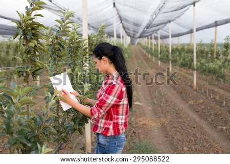 Young woman agronomist standing beside apple trees in modern orchard with anti hail net - stock photo