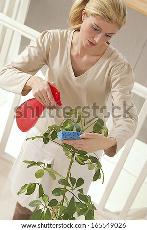 young woman cleaning plants by wet sponge and spray water at home   - stock photo