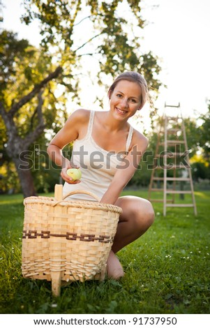 Young woman collecting apples in an orchard on a lovely sunny summer day - stock photo