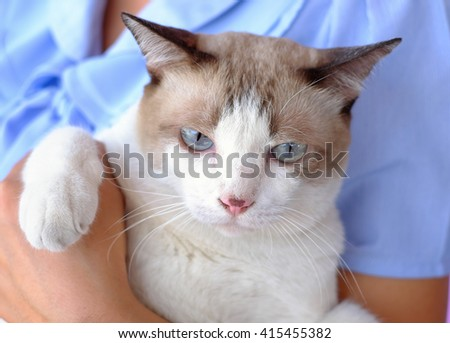 young woman holding beautiful two color cat