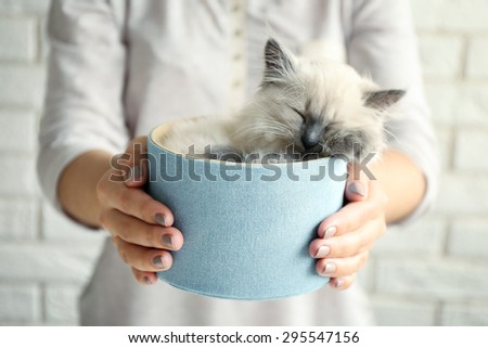 Young woman holding box with cat on light wall background - stock photo