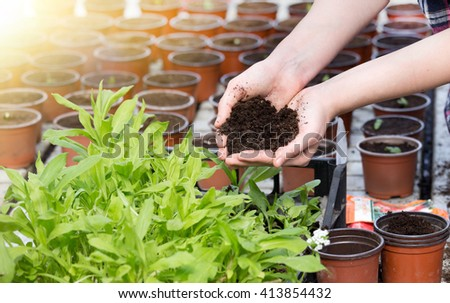 Young woman holding in her palms soil in heart shape beside sprouts and flower pots