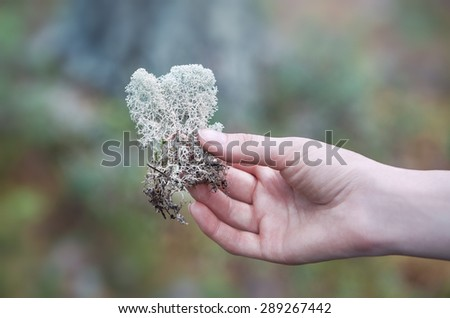 Young woman holding lichen in hand. - stock photo