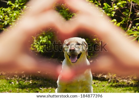 Young woman is making heart shape with her dog. - stock photo