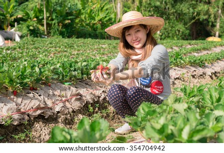 young woman is picking of strawberry in the field - stock photo