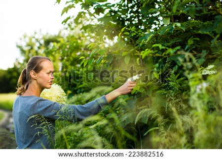 Young woman picking elderflower to make an infusion at home - stock photo