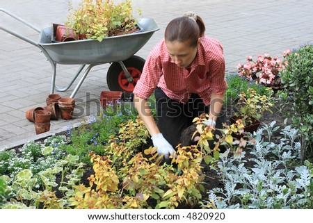 Young woman planting out flowers sprouts in a garden - stock photo
