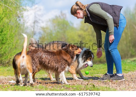 young woman playing with a Beagle, a Collie-Mix and an Australian Shepherd dog outdoors