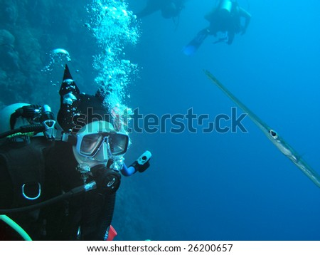 Young woman scuba diver with fish - stock photo