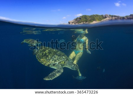 Young woman swims snorkeling with sea turtles - stock photo