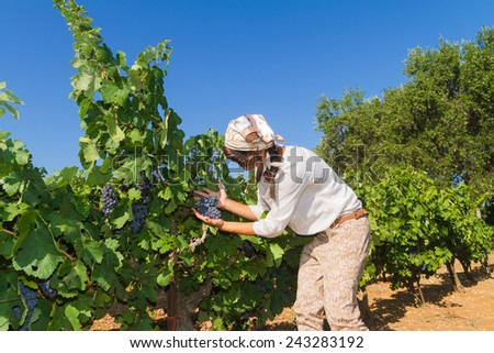 Young woman, vine grower, walks through grape vines inspecting the fresh grape crop. - stock photo
