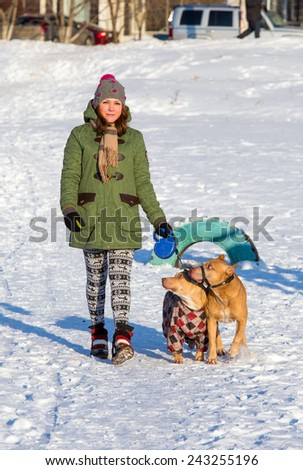 Young woman walking with two dogs of breed American Pit Bull Terrier winter - stock photo