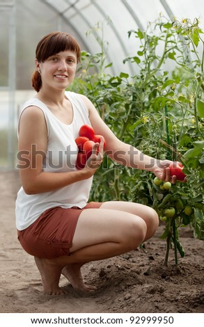 Young woman with  harvested tomato in greenhouse - stock photo