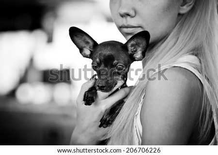 Young woman with her little russian toy terrier. Monochrome.