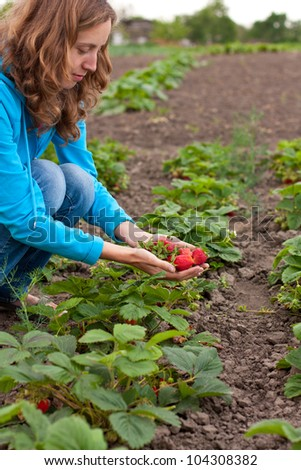 Young woman with red fresh strawberries in hands in the garden. Harvesting strawberries - stock photo
