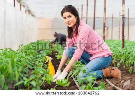 Young woman working in a greenhouse planting salad seedlings and an other worker on background - stock photo