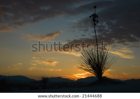 Yucca silhouette in White Sands National Monument, New Mexico - stock photo