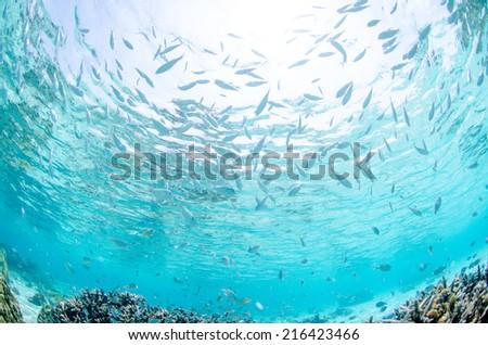 zamami okinawa  diving - stock photo