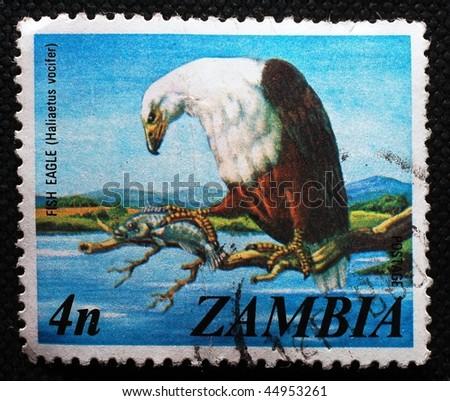 ZAMBIA - CIRCA 1974: A stamp printed in Zambia shows image of a fish eagle (Haliaetus vocifer), circa 1974 - stock photo