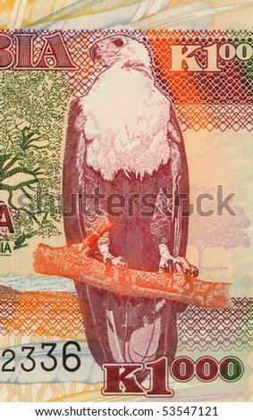 ZAMBIA - CIRCA 2003: African Fish Eagle on 1000 Kwacha 2003 Banknote from Zambia. - stock photo