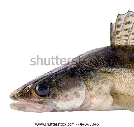 Eyetooth stock images royalty free images vectors for Fish with scales and fins