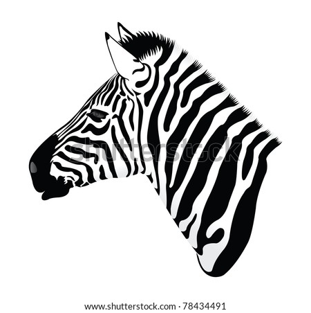 Zebra Profile Drawing