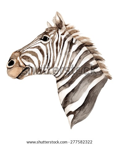 Zebra head isolated on white background. Watercolor illustration