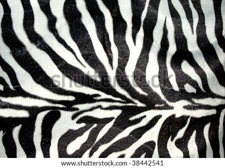Zebra print for background - stock photo