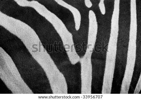 Zebra skin - stock photo