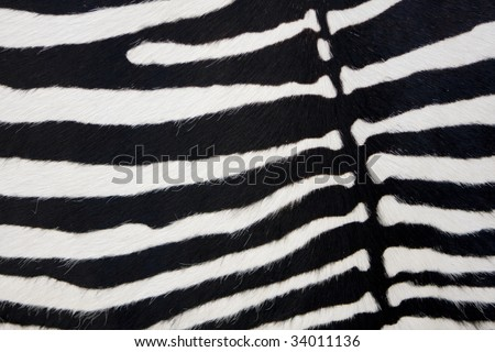 Zebra skin detail - stock photo