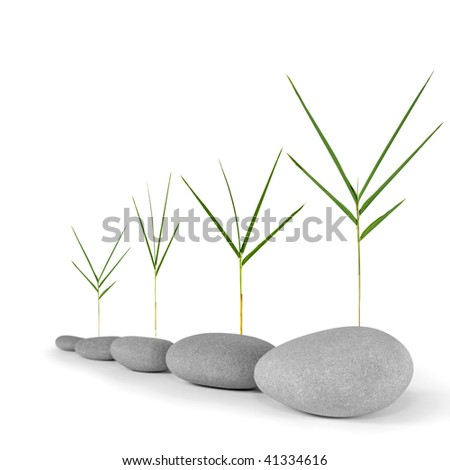 Zen abstract of natural grey spa stones with bamboo leaf grass, over white. Focus on the front stone