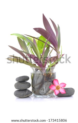 Zen And Spa Stones With Frangipani Flower And Small Plant In Glass Vase Over White Background - stock photo