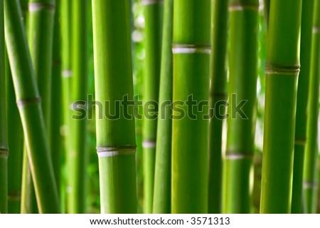 Zen bamboo - stock photo