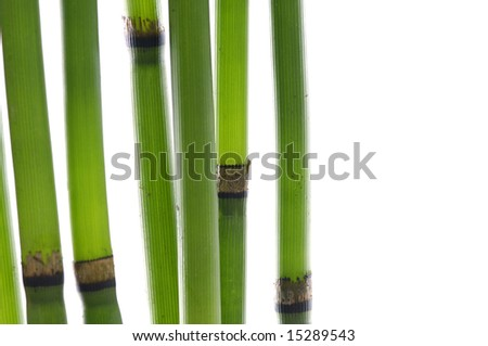 Zen bamboo stems .isolated on white