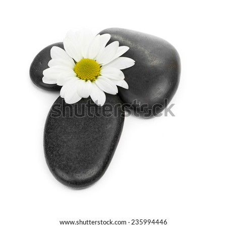 zen basalt stones and daisy isolated on white - stock photo
