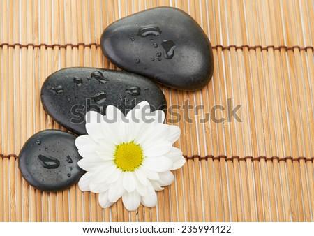 zen basalt stones and daisy isolated on wood - stock photo