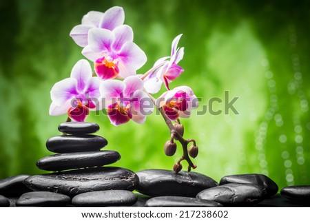 zen basalt stones and orchid - stock photo
