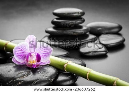 zen basalt stones and orchid.  - stock photo