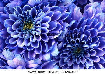 Zen floral background of blue flowers - stock photo