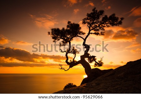 Zen is a tree on the cliff rocks and sunset over the sea - stock photo