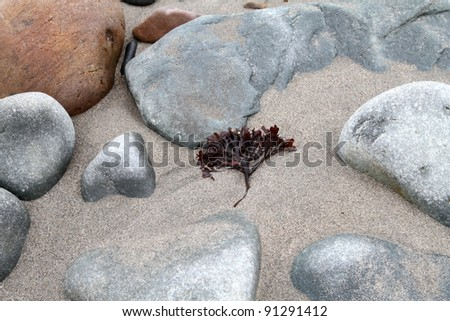 Zen landscape - stock photo