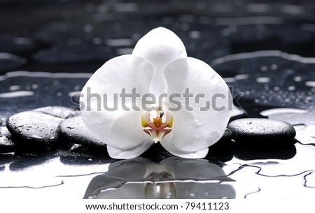 zen or spa still life on black with white orchid - stock photo