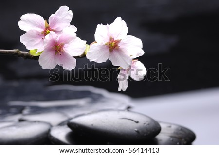 Zen stone and spring cherry with water drops - stock photo