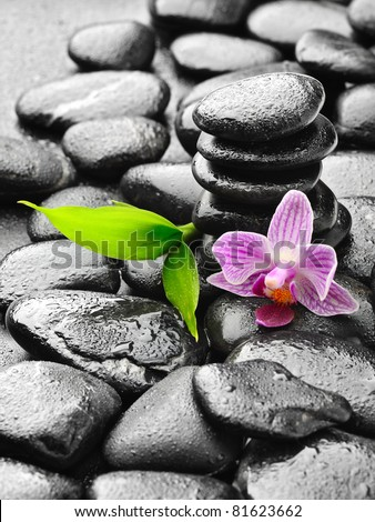 zen stones and pink orchid in the water