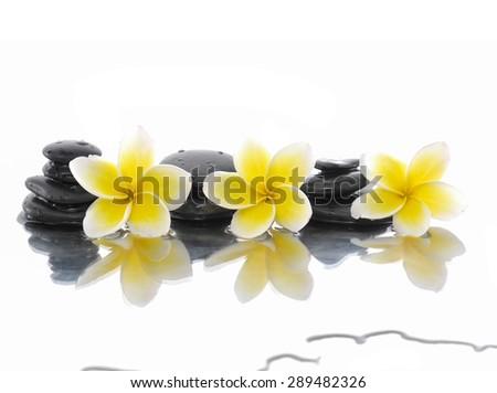 zen stones and three frangipani  - stock photo