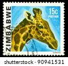 ZIMBABWE - CIRCA 1985: a stamp printed by Zimbabwe shows Giraffe, series animals, circa 1967 - stock photo