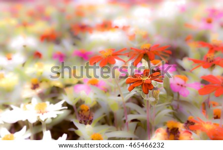 Zinnia flower and blurry background